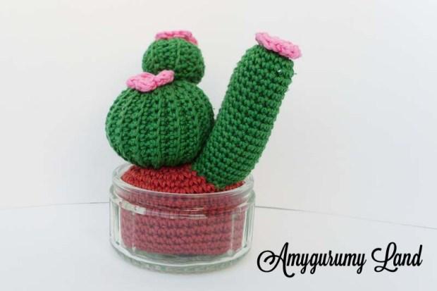 Cactus-3