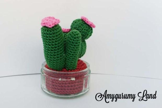 Cactus-5