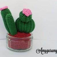 Cactus - Tiny garden