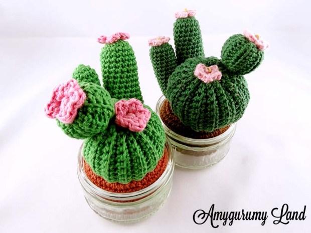 Cactus-12