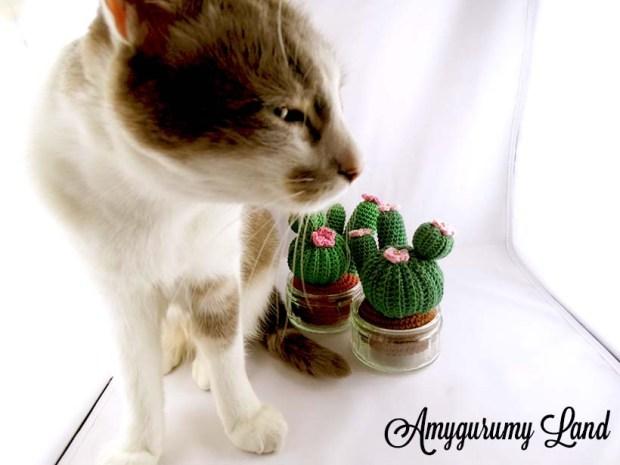 Cactus-13