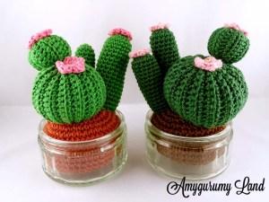 Cactus-7